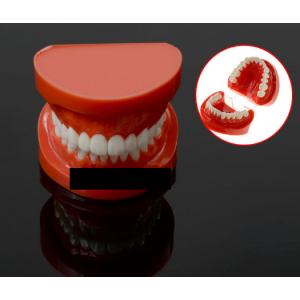 Arcada dentara dinti plastic