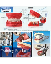 Arcada dentara model Phantom 32 dinti rasina + ARTICULATOR
